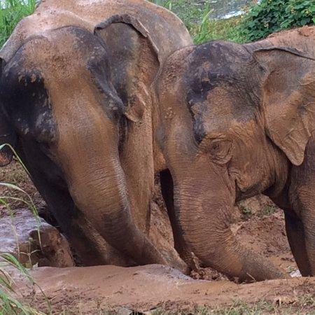 Sayaboury, Laos: photo5.jpg