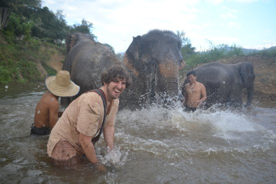 how to take care of an elephant