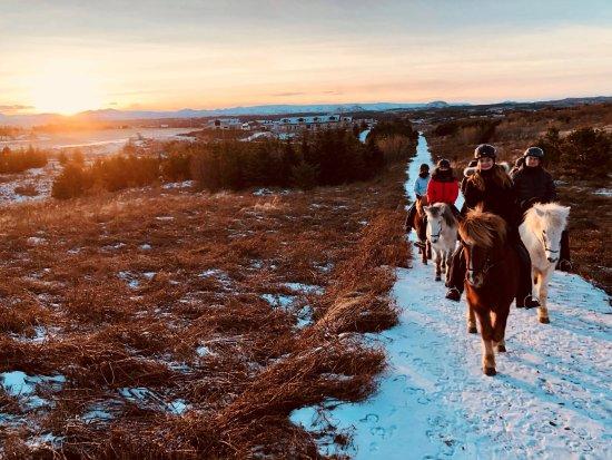 Viking Horses: Family private tour in beautiful winter sun