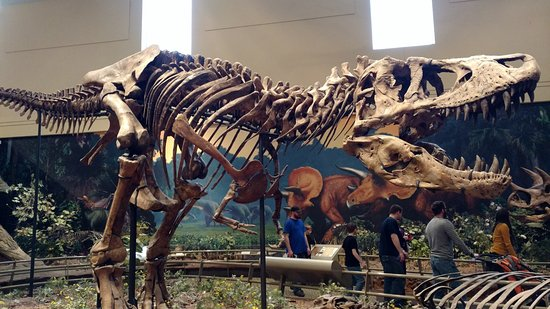 20171117 133534 carnegie museum of for T rex location