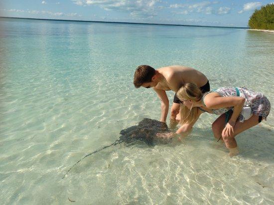 Green Turtle Cay: Rochenfütterung