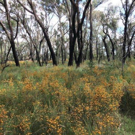 Kilsyth, Australia: Bungalook Reserve