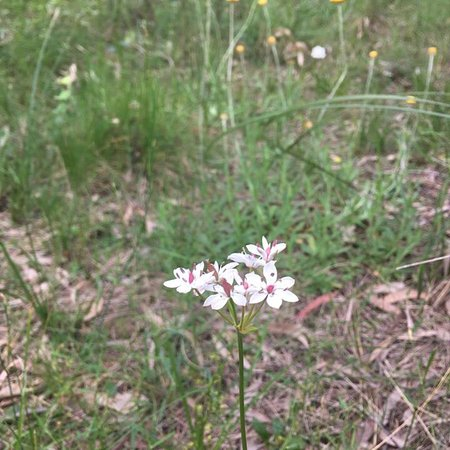 Kilsyth, Australien: Bungalook Reserve