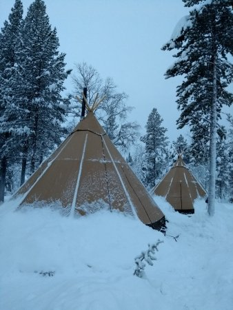 Northern Lights and wildlife in Swedish Lapland Tents in Sami C& & Tents in Sami Camp - Picture of Northern Lights and wildlife in ...