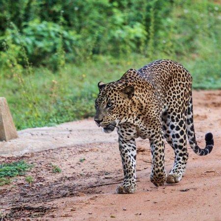 Tissamaharama, Sri Lanka: photo0.jpg