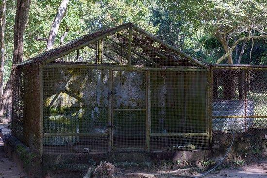 Calauit Wildlife Sanctuary: poor animals