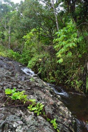 Koroyanitu National Heritage Park: Cooling down in fresh Water