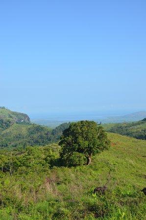 Koroyanitu National Heritage Park : Big Mangotree