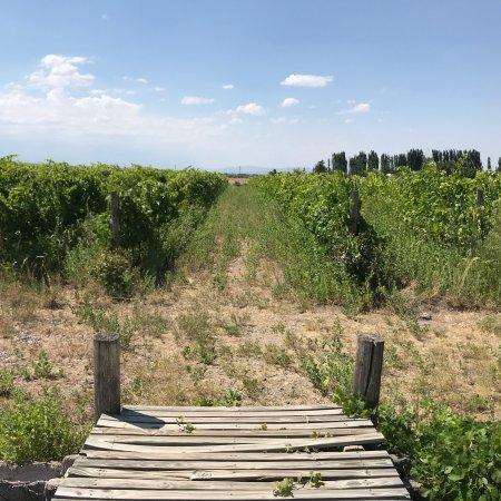 Prowincja Mendoza, Argentyna: photo2.jpg