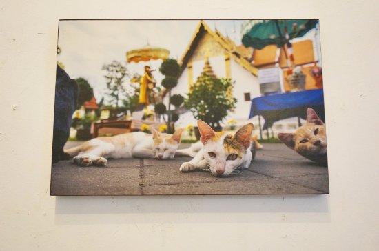 Nan Province, Thailand: รูปแมวหน้าวัดที่น่าน