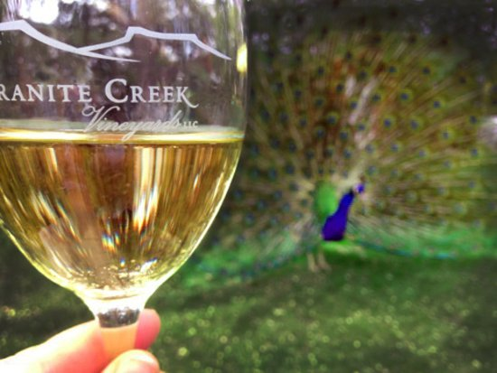 Chino Valley, AZ: Chardonnay and Blue, one of the resident peacocks