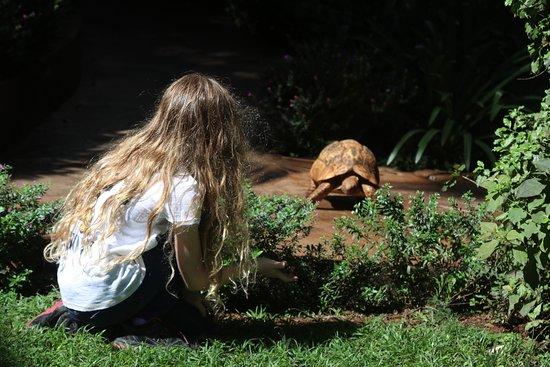 Palacina Residence & Suites: Resident tortoises