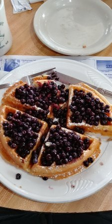 North Hampton, Nueva Hampshire: real wild maine blueberries!