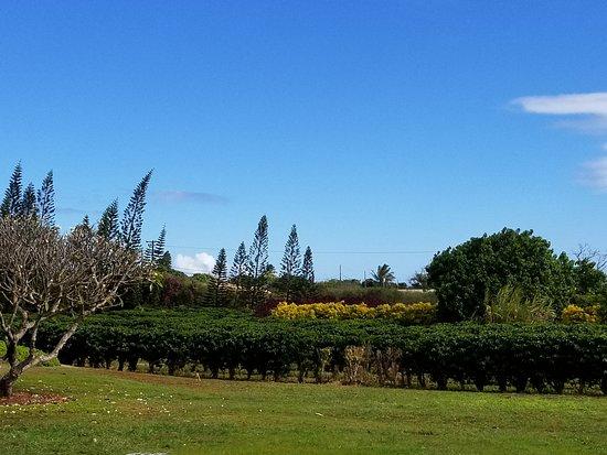 Kalaheo, HI: property grounds.
