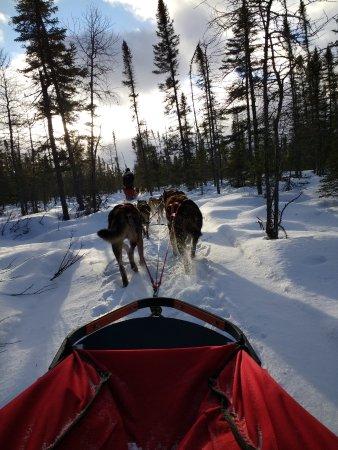 Ely, MN: Chilly Dogs dog sledding