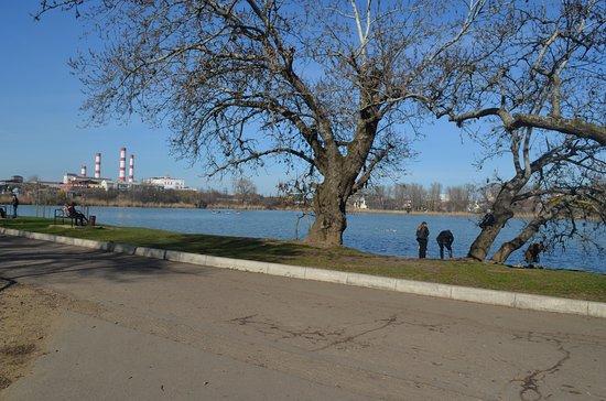 The Solnechny Ostrov (Sunny Island) Park: 2013 - легендарное дерево под которым все сидят