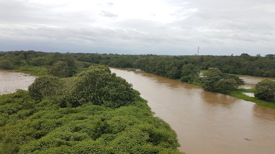 Cano Negro, Costa Rica: View from the observation tower