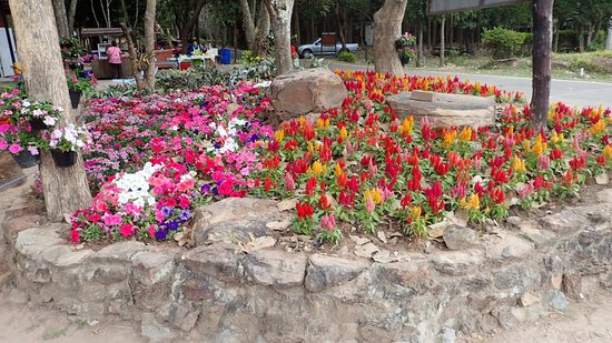 Provincie Udon Thani, Thailand: Flowers 4