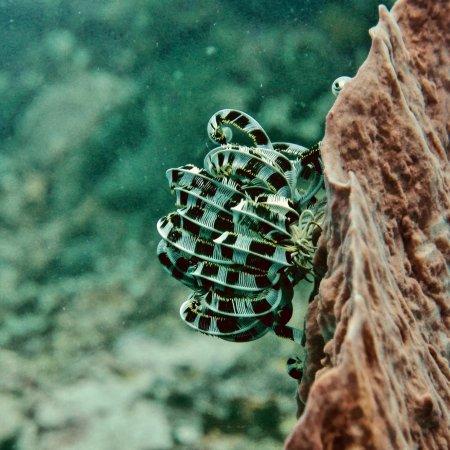 Bali Diving Academy Lembongan: photo5.jpg