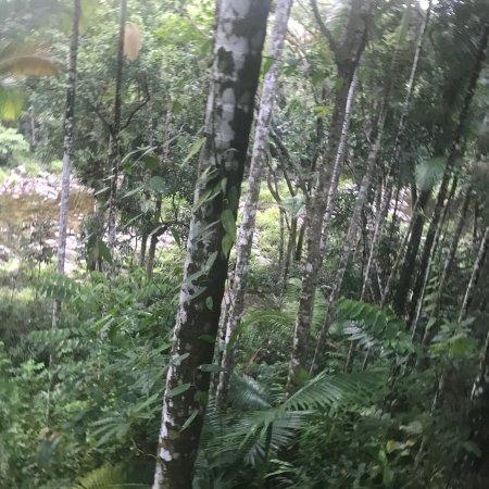 Lost in nature ..