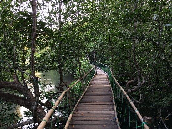 Mamuju, Indonesia: kondisi mangrove yang masih baik
