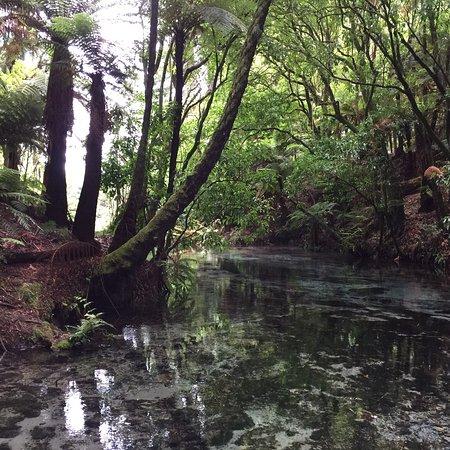 Hamurana, Nueva Zelanda: photo3.jpg