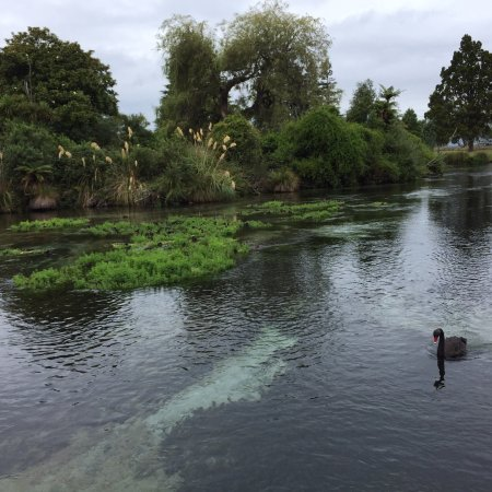 Hamurana, Nueva Zelanda: photo6.jpg