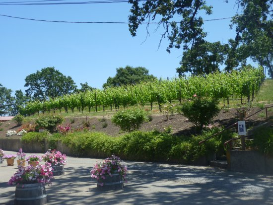 Martinelli Winery & Vineyards