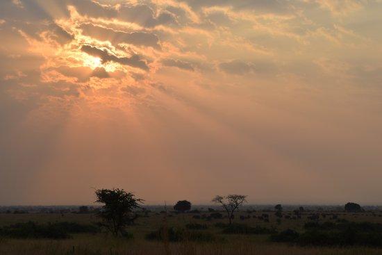 Кампала, Уганда: Queen Elizabeth National Park