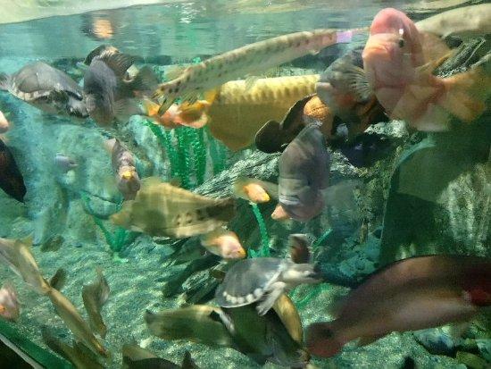 Adler Oceanarium