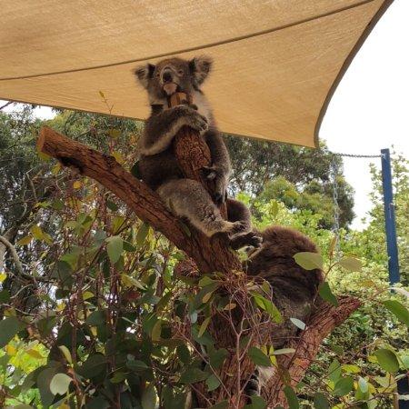 Seddon, Australia: photo2.jpg