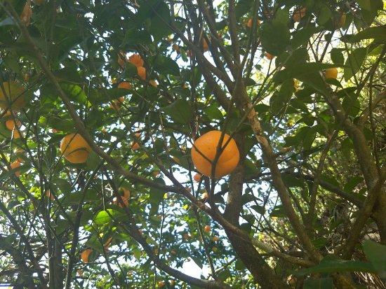 Orange garden - Picture of Sewaro Rock Garden, Pelling - TripAdvisor