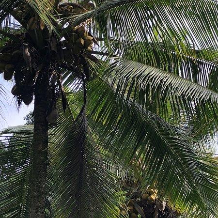 Kilauea, HI: photo1.jpg