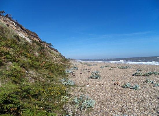 Dunwich Heath and Beach Photo