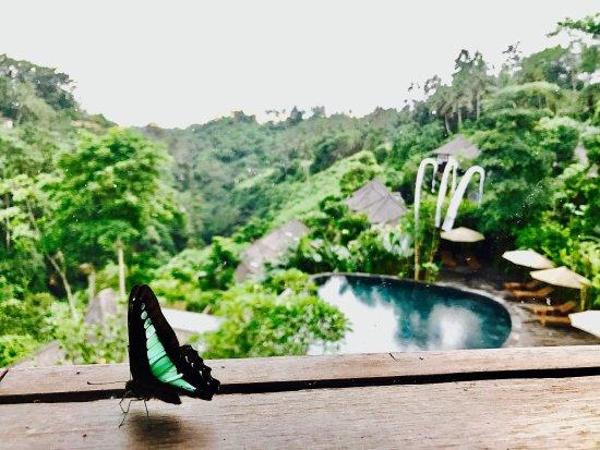 Udhiana Resort Ubud: Some fragments of heaven