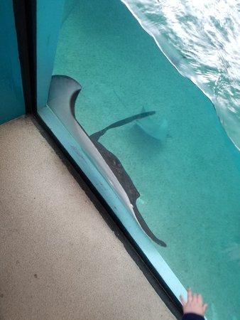 写真Newport Aquarium枚