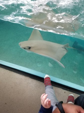 写真Newport Aquarium枚