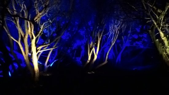 The Lost Gardens of Heligan: Heligan by night
