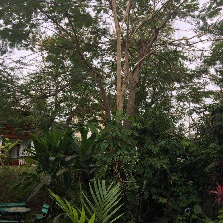 Villa Chitdara: photo8.jpg