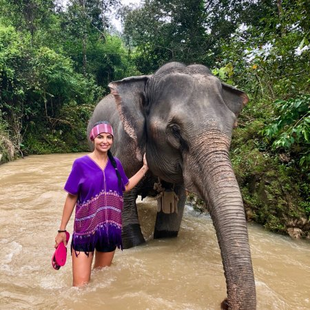 Elephants At Home: Elephants At Home