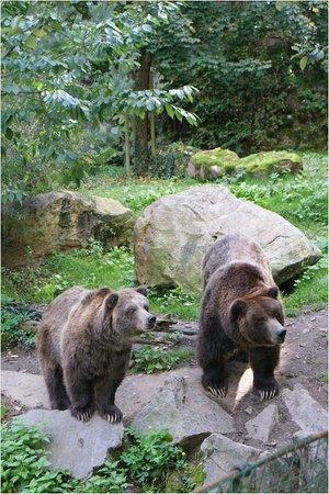 Zoo Děčín: Medvěd grizzly