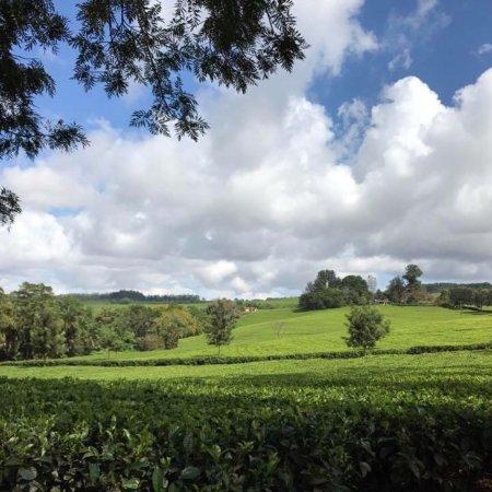 Thyolo, Малави: photo0.jpg