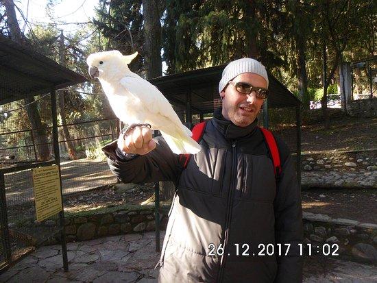 Trikala, Grecja: Ο Μάκης ο παπαγάλος.