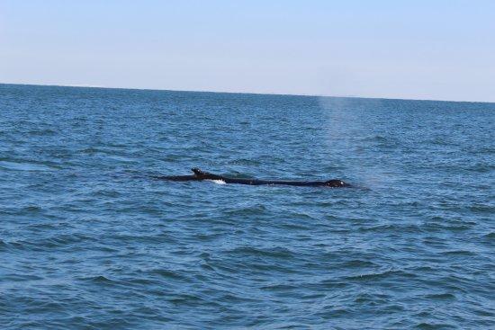 Virginia Aquarium Marine Science Center Whale Watching Va Beach