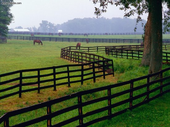 The Woodford Inn: Surrounded by horse country, Versailles Ky is the perfect place to get away