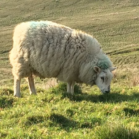 Dromore, UK: Grove Fort, Self Catering Farmhouse, sleeps 6.