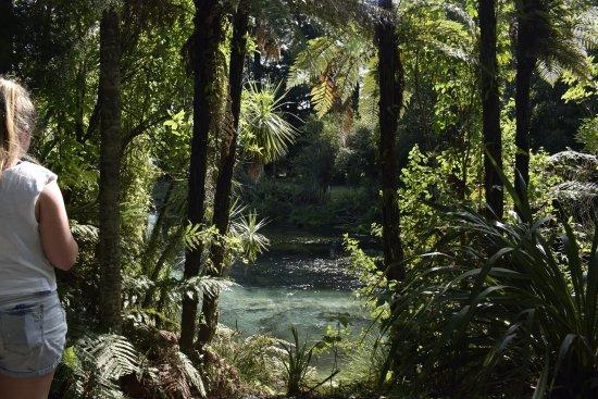 Hamurana, Nueva Zelanda: Bird watching