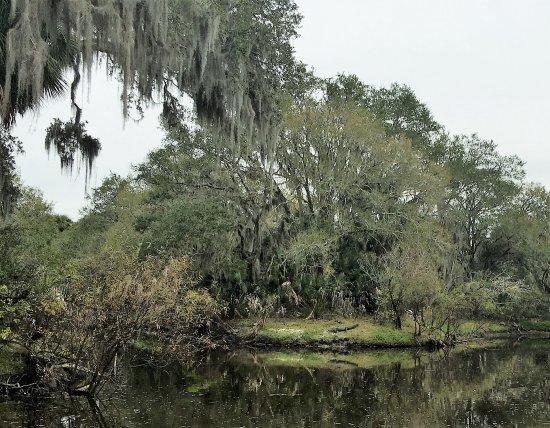 Venice Myakka River Park: Lake