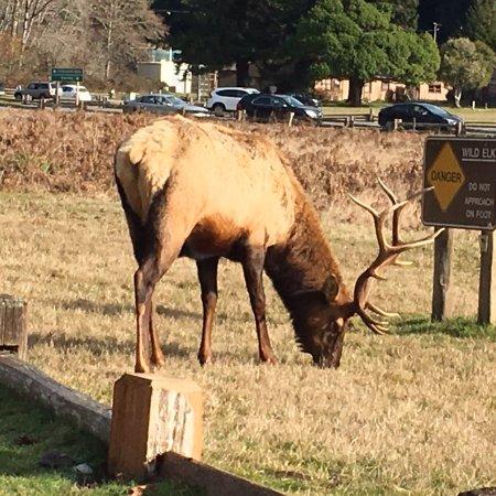 Prairie Creek Redwoods State Park: photo3.jpg