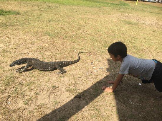 Pittwater, Australia: My 5 year old wants Goanna pet
